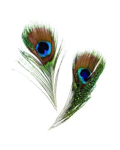 Peacock Feathers Pack